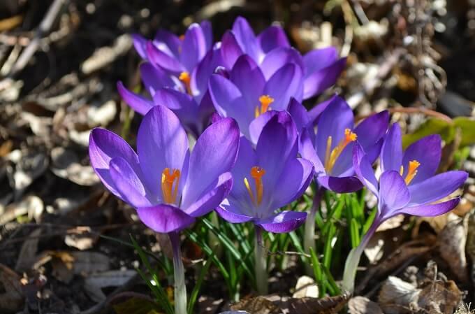 flori si ganduri frumoase de 8 martie