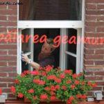 spalarea geamurilor
